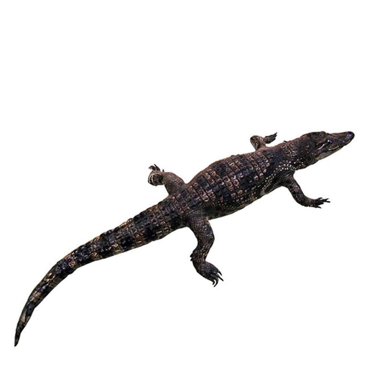 Cá sấu nhồi bông S1201